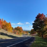 Autumn Maples in All of Their Splendor